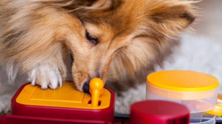 13 Best Interactive Dog Toys – Top Picks Not to Miss in 2021