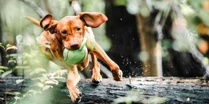 Factors to Consider When Buying The Best Interactive Toys for Dogs