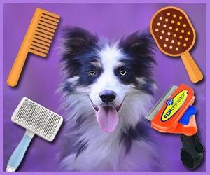 best dog grooming brush 2019
