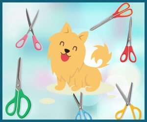 Best Dog Grooming Scissors 2018
