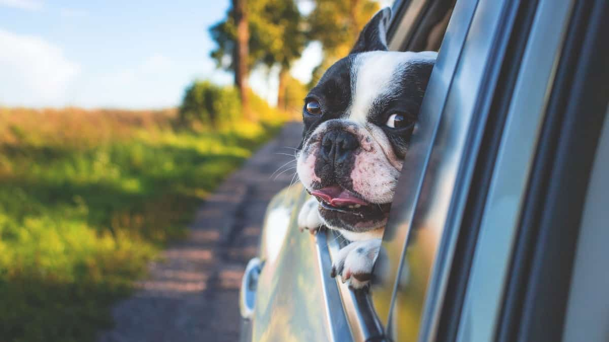 Best Dog Car Seats 2020 – Buyer's Guide