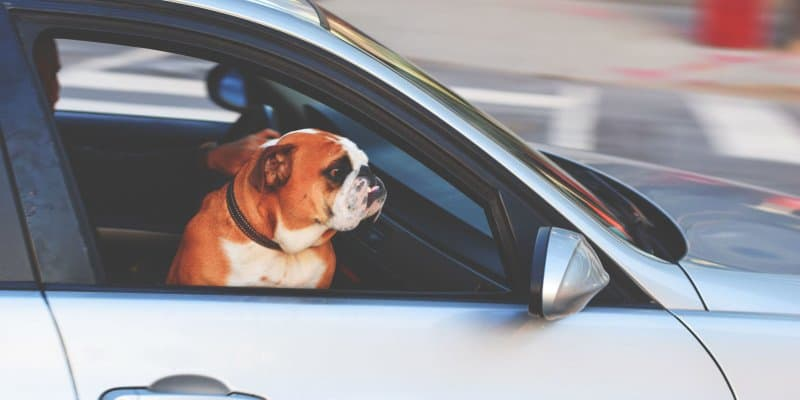 Best Dog Car Seats Buyer's Guide