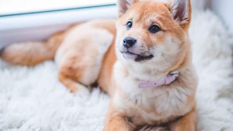 Best Outdoor Dog Beds 2021 – Reviews & Buyer's Guide