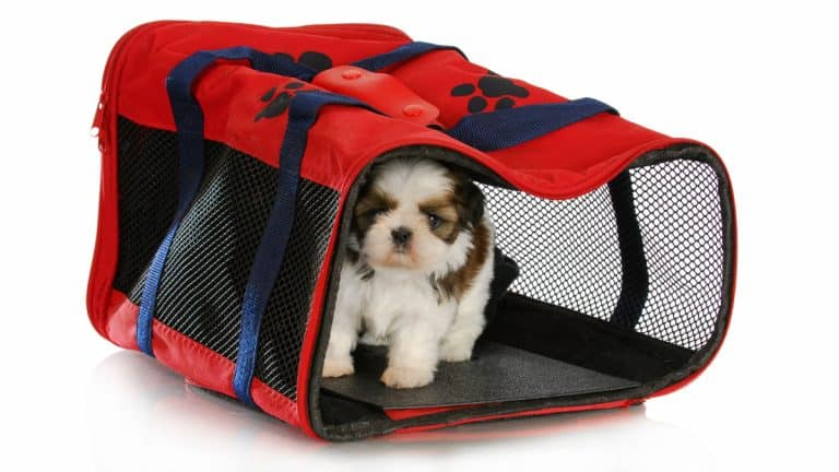 Best Travel Dog Crate 2021 – Reviews & Buyer's Guide