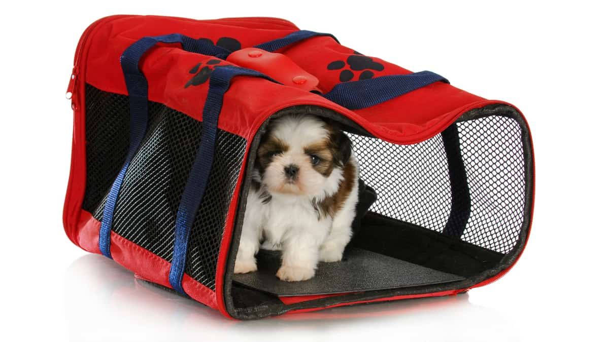 Best Travel Dog Crate 2020