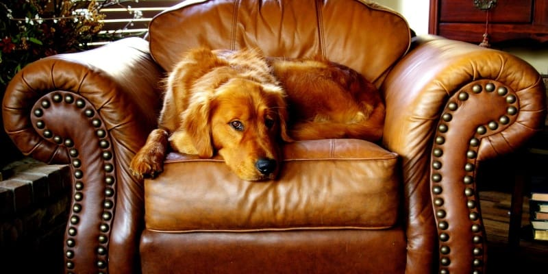 Why Do You Need a Golden Retriever Dog Bed?