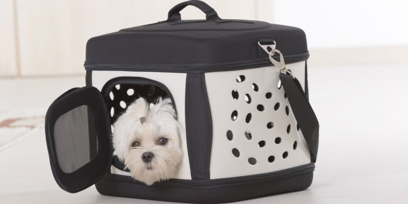 adorable dog in a travel dog crate
