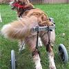 Adjustable Dog Wheelchair (M)