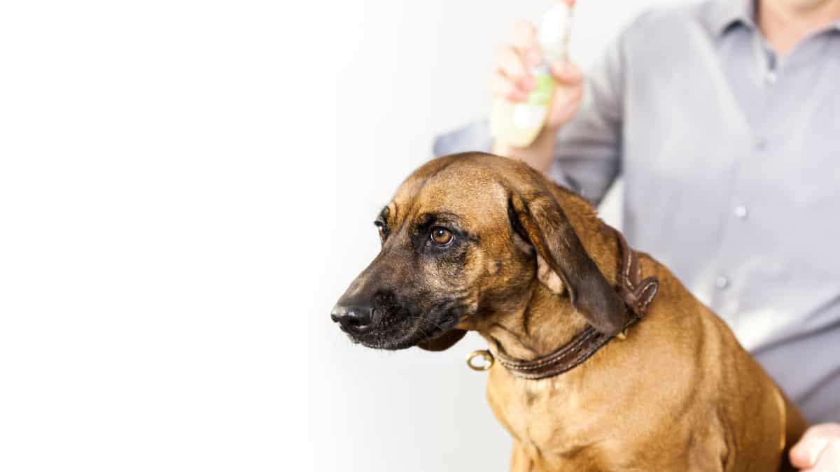 Best Dog Dry Shampoo 2020 – Reviews & Buyer's Guide