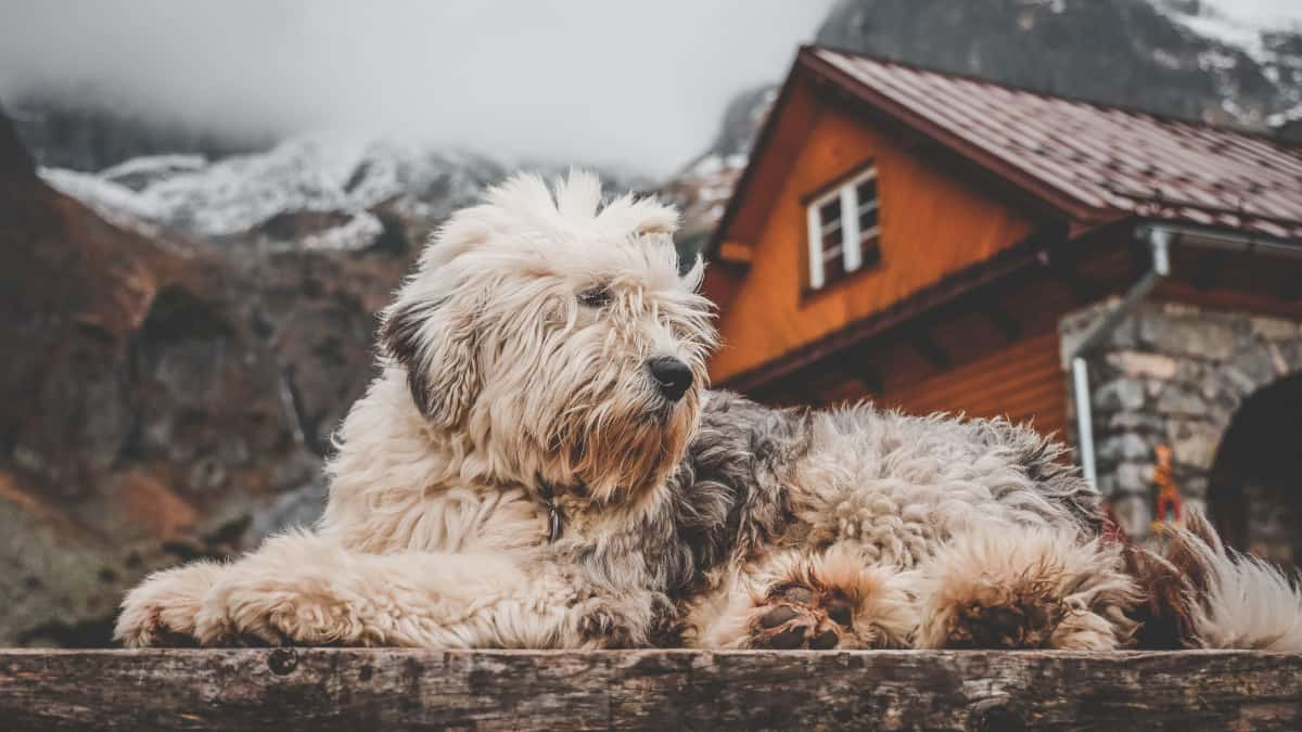 Best Heated Dog House 2020 – Reviews & Buyer's Guide