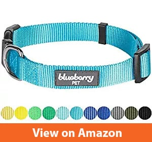Blueberry Pet Classic Solid Color Dog Collar