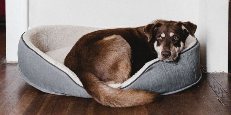 Chew Proof Dog Bed Buyer's Guide