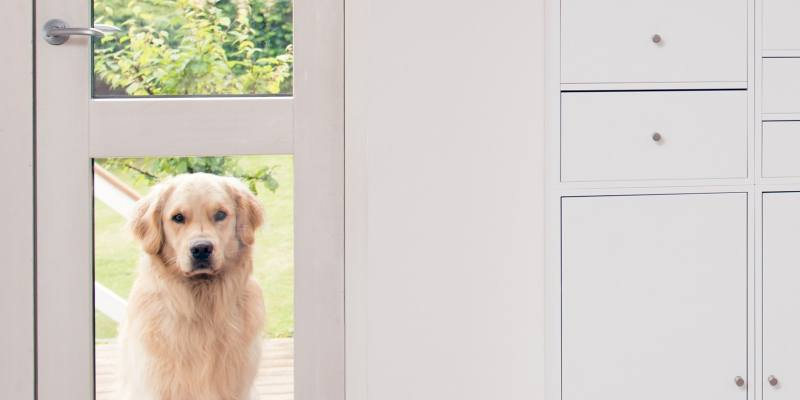 Electronic Dog Door Buying Guide