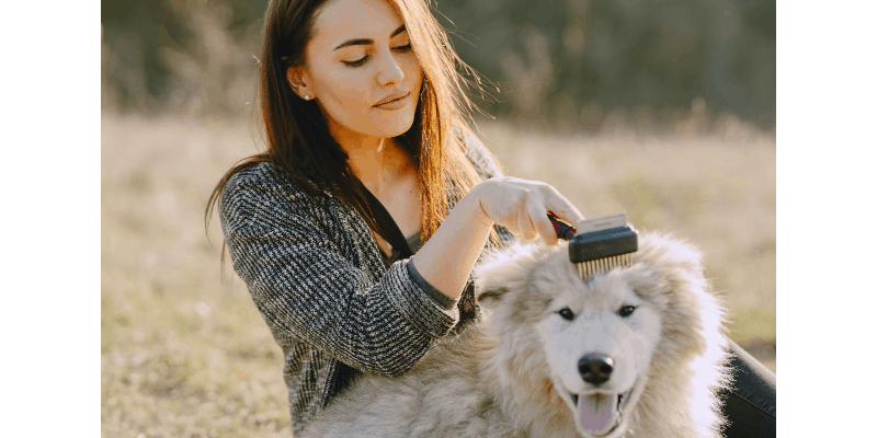 woman grooming her pet with dog comb