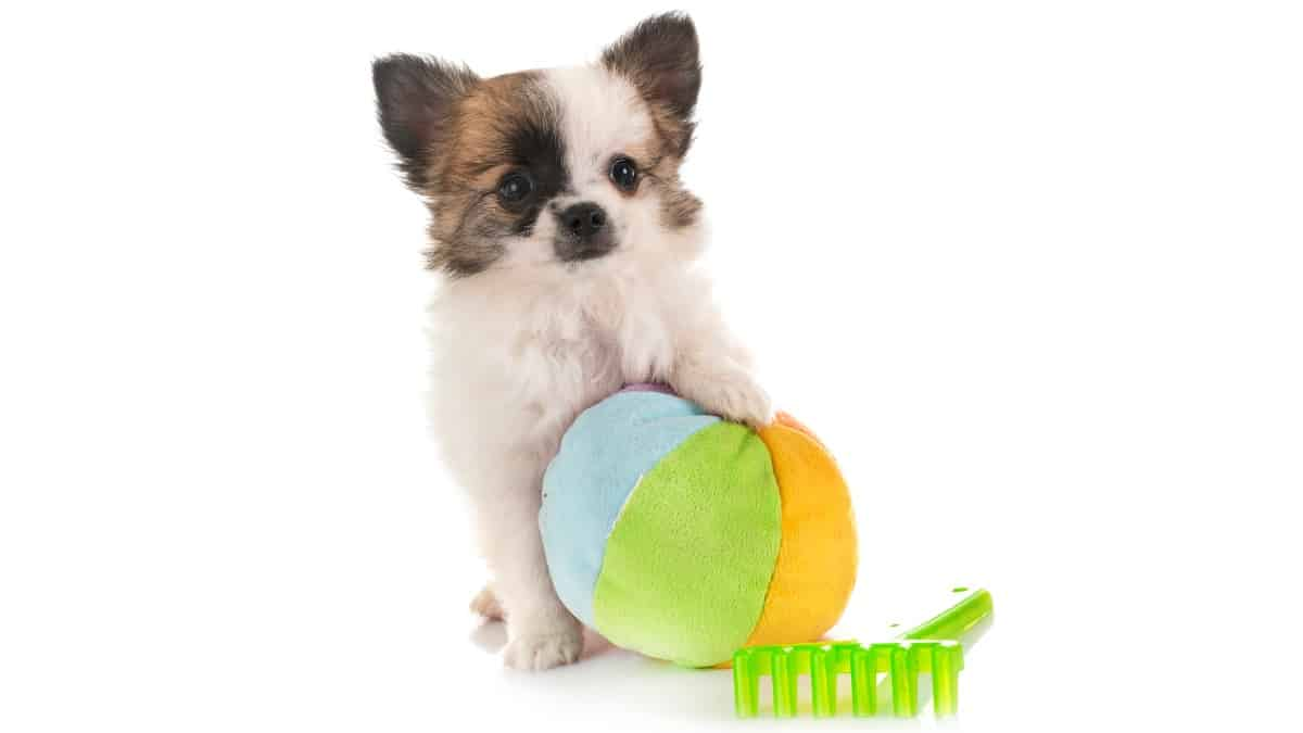 Best Puppy Toys To Keep Them Busy 2020 – Buyer's Guide