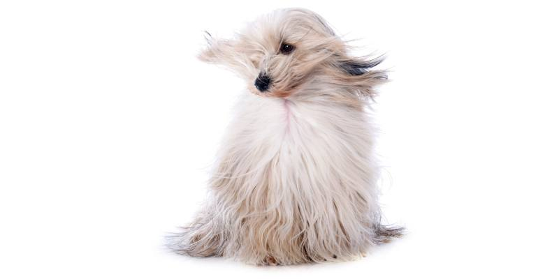 Dog Dryers Buying Guide