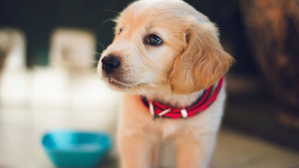 Best Dog Food for Puppies with Sensitive Stomachs in 2020 – Buyer's Guide