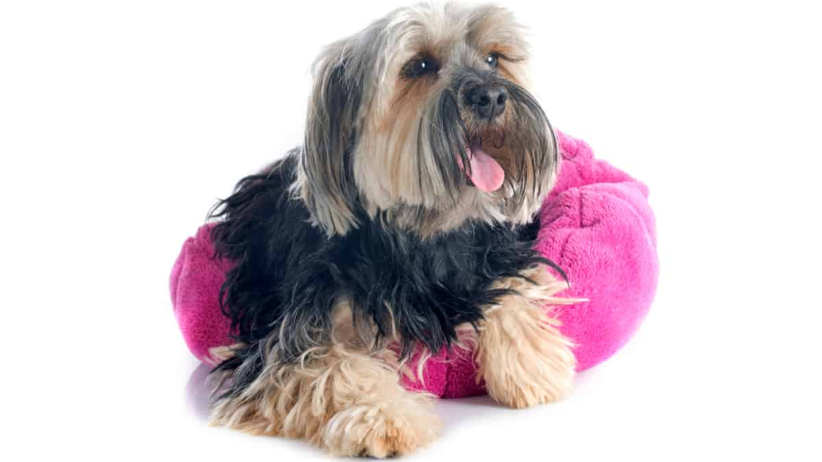Choosing the Best Washable Dog Beds
