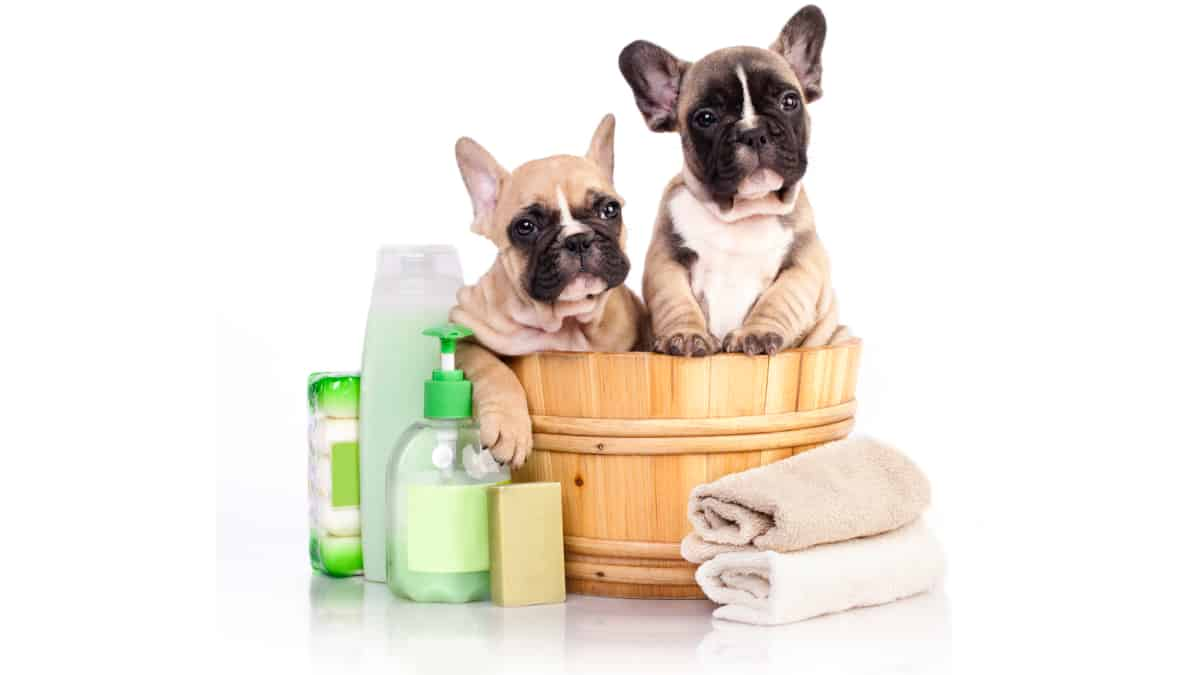 Best Dog Shampoo for Bulldogs 2020 – Buyer's Guide