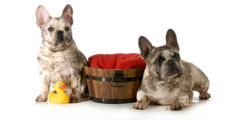 Grooming and Bathing Products for Bulldogs