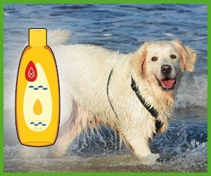 best dog shampoo for golden retrievers