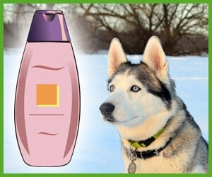 best dog shampoo for huskies