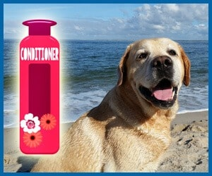 best dog shampoo for labs
