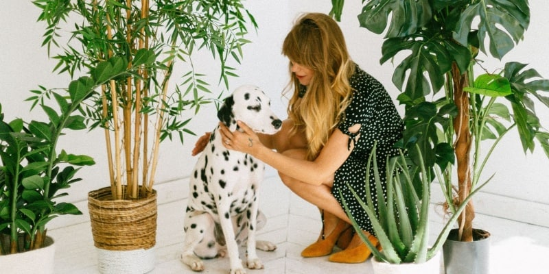 health problems with a Dalmatian