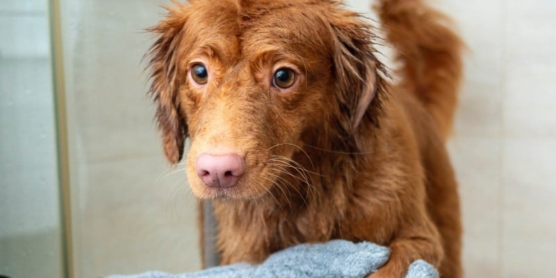 Dog Shampoo for Sensitive Skin – Things to Consider
