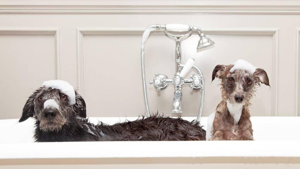Best Dog Shampoo for Sensitive Skin