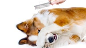 Best Dog Grooming Brush Reviews – Top Rated For Short and Long Hair (2020)
