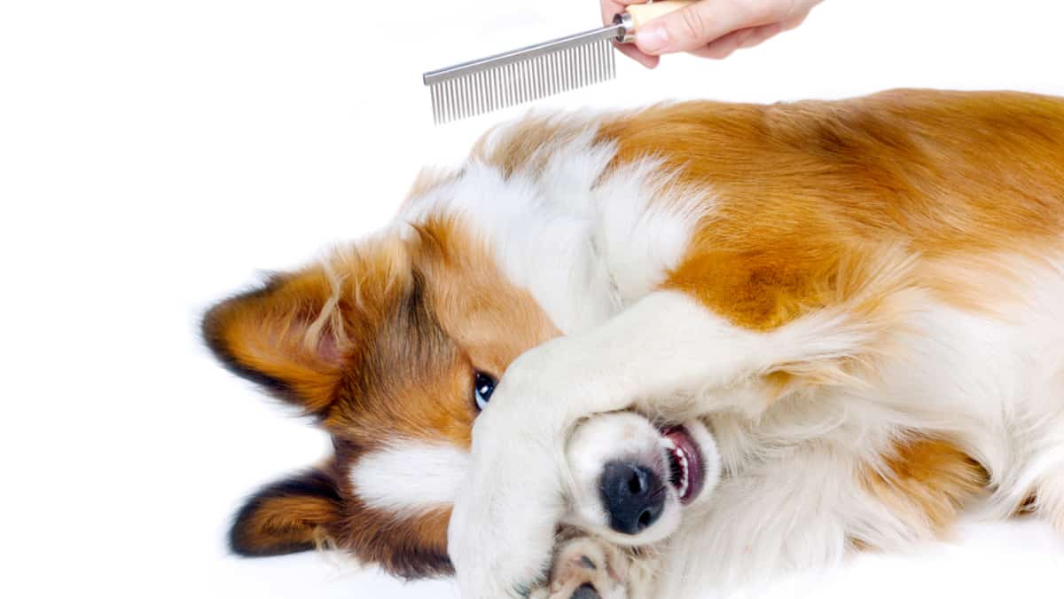 Pet Massage Medium /& Large Dogs and Cats Uhomy Pets Self-Cleaning Slicker Brush Professional Pet Grooming Brush for Small All Hair Types-Shedding Grooming Tools Removes Tangles and Mats