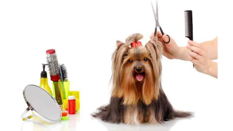 Best Dog Grooming Scissors 2021 – Reviews and Buyer's Guide