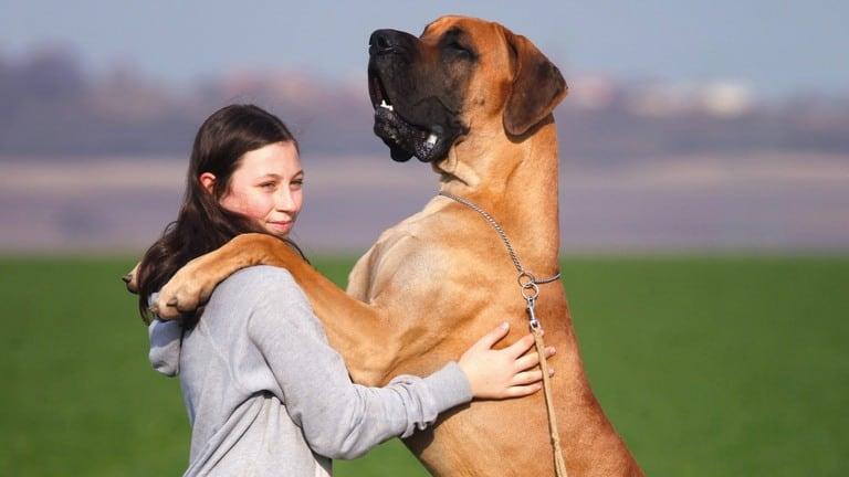 Best Pooper Scooper for Big Dogs