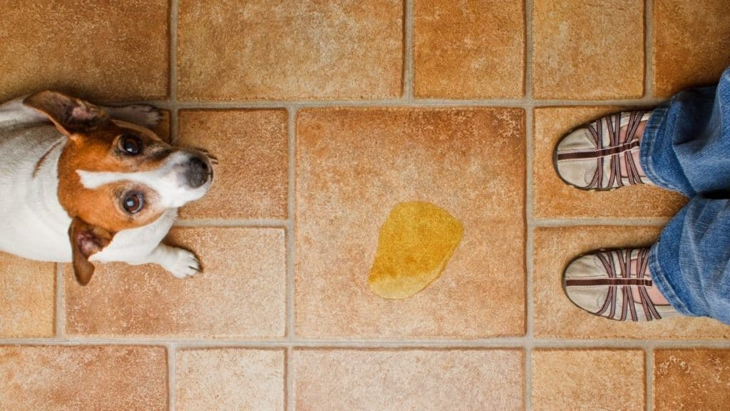 best products for dog urine removal