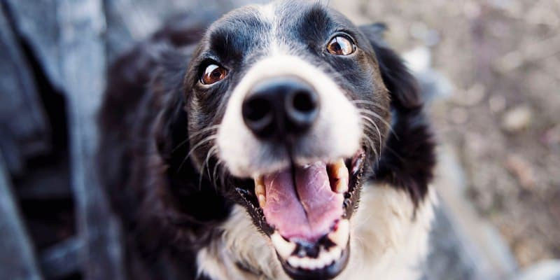 Things You Must Know Before Getting Dental Wipes For Dogs