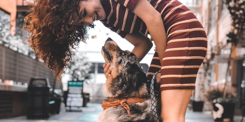 woman touching a calm dog