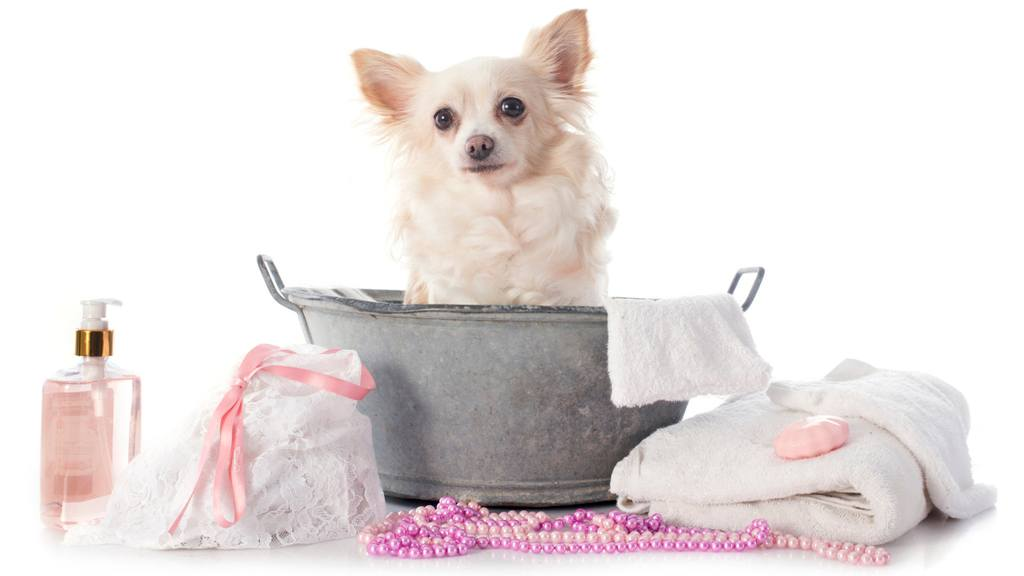 How to Groom a Dog at Home | Dog Grooming Tips and Tricks