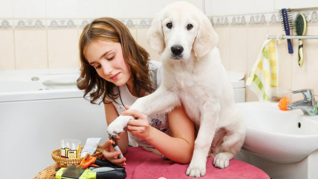The Best Dog Nail Clippers with Sensor   DIY Grooming