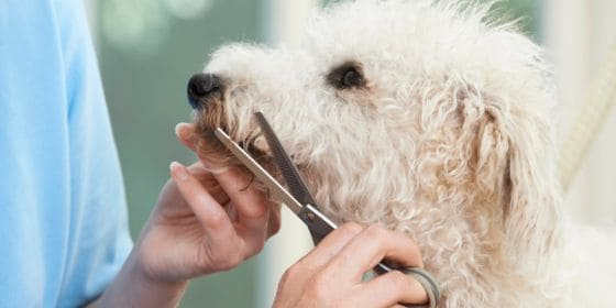 Trimming Your Dog with Scissors