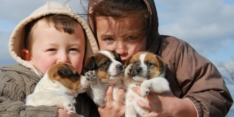 Where do Jack Russell Terriers and Parson Russell Terriers Come From?