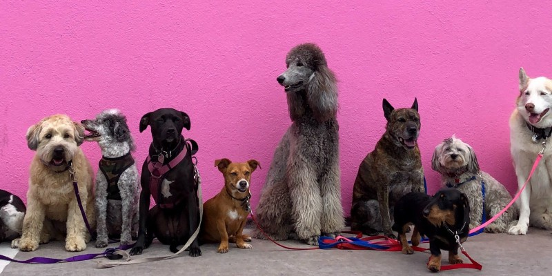 Different types of dogs sitting side by side on pink wall