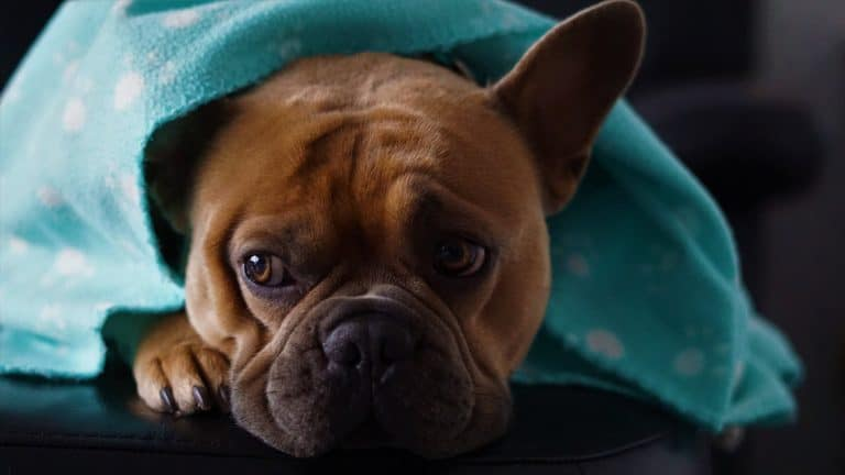 How to Keep Your Dog Warm and Comfortable This Winter