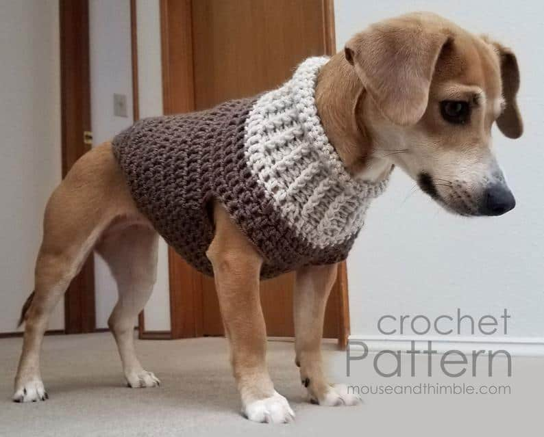 Adorable dog wearing crochet dog sweater