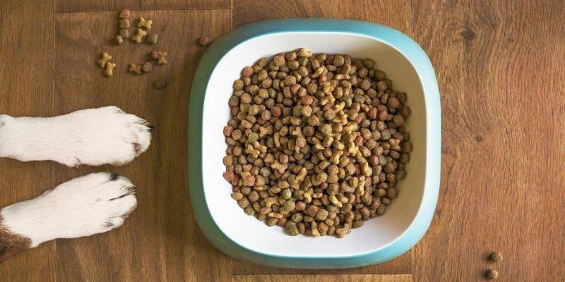 Dog paws near a bowl of dog food