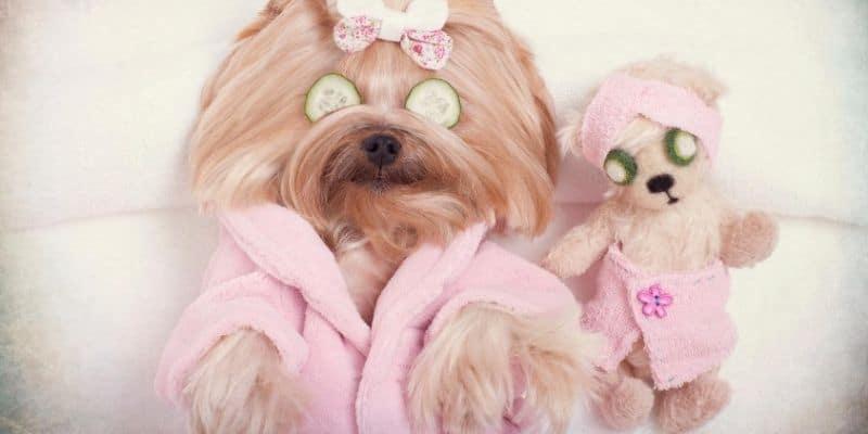 Dog spa treatment