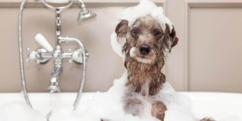 Adorable dog bath bubbles