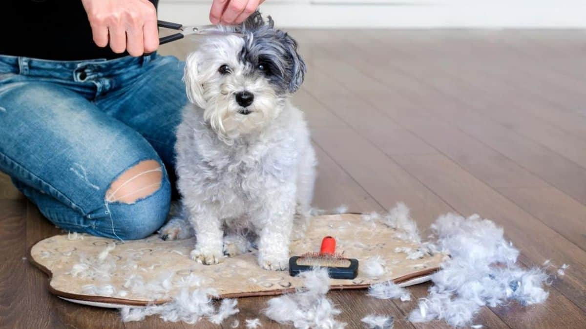 Is It Hard to Groom Your Own Dog