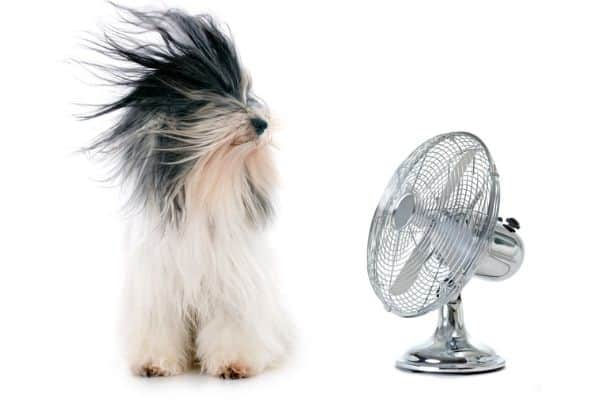 Long haired dog in front of a fan