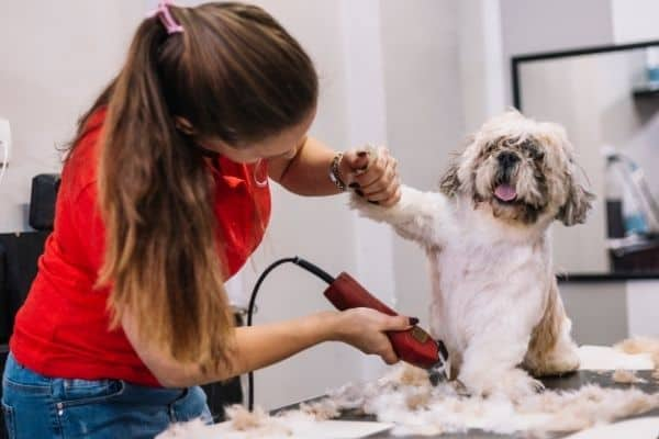 Grooming dog with thick fur
